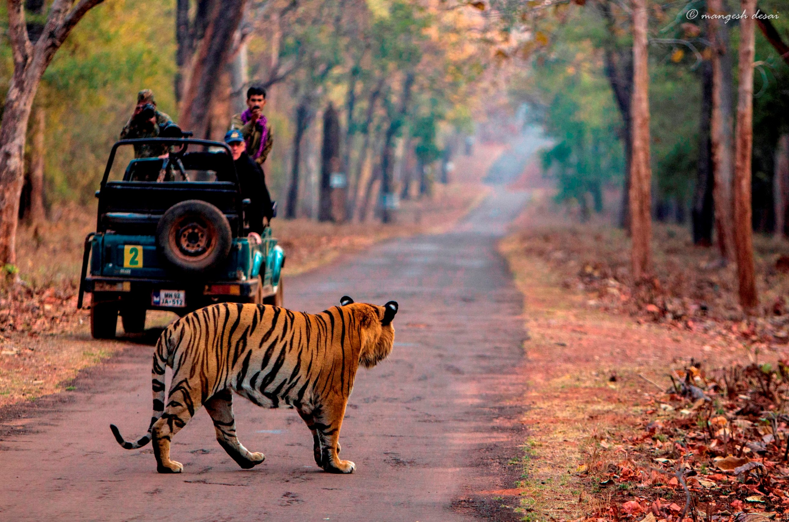 a trip to tadoba tiger reserve Best time to visit tadoba national park  a plethora of options surround you when it comes to accommodation in tadoba tiger reserve in  let's plan your trip.
